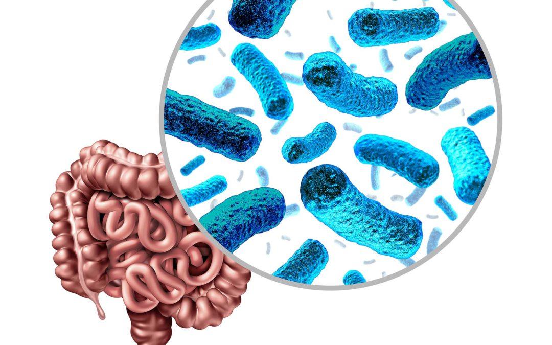 CARDIOLOGÍA: LA MICROBIOTA JUEGA UN PAPEL FUNDAMENTAL EN LA SALUD DE LA PERSONA